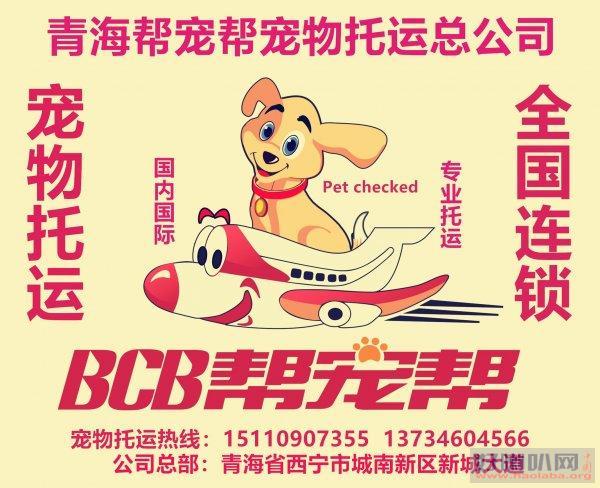 西宁祁连门源刚察海晏宠物托运找西宁帮宠帮宠物托运