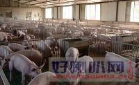 德阳育肥猪养殖评估_养牛场动迁评估_种猪生态园评估