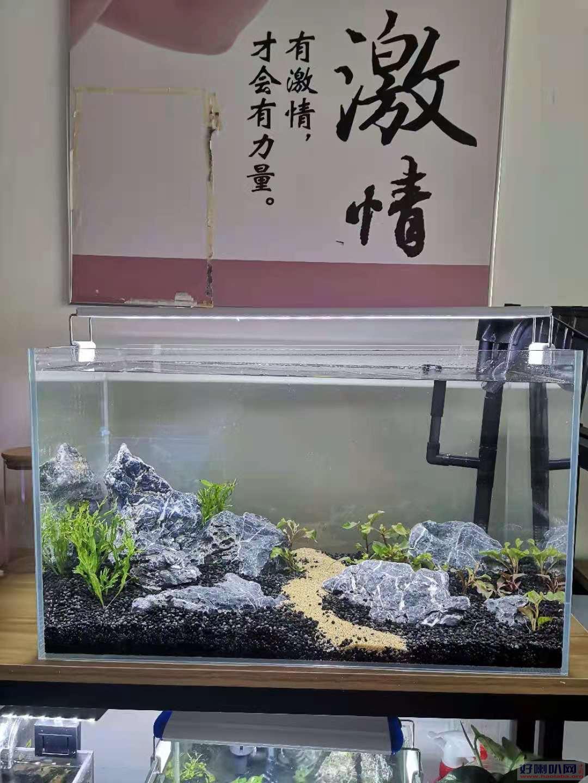 济南二环东路鱼缸换水